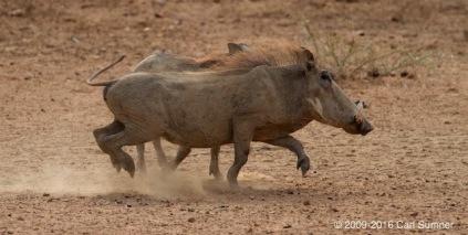 botswana-safari-_mg_4284