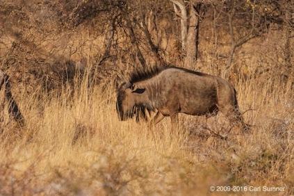 botswana-safari-_mg_4792