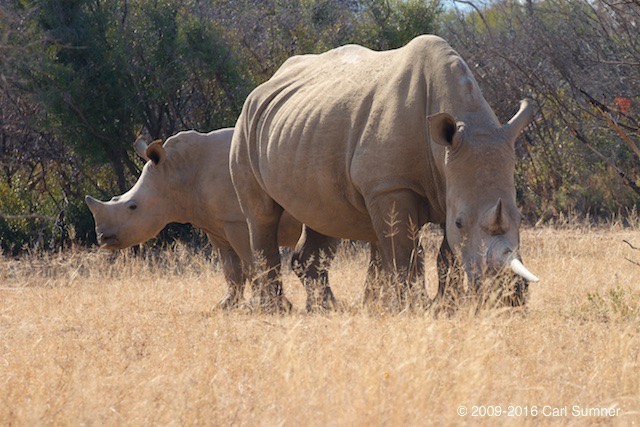 botswana-safari-_mg_4907