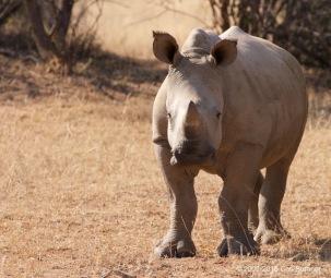 botswana-safari-_mg_4925