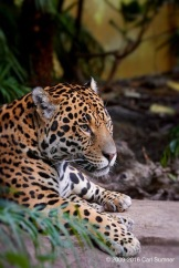 chester-zoo-img_3675