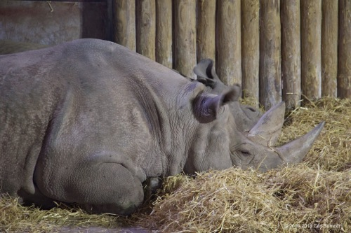 chester-zoo-x61a4764
