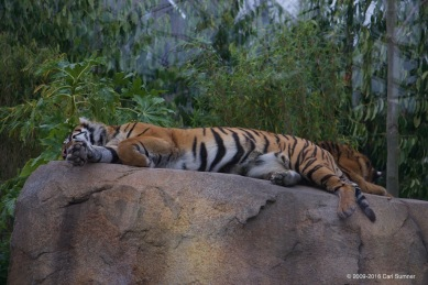 chester-zoo-x61a4804