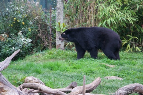 chester-zoo-x61a4834