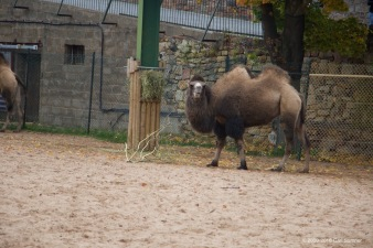chester-zoo-x61a4856