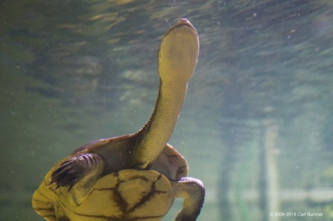 chester-zoo-x61a4878