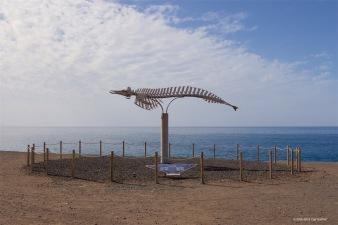 fuerteventura-x61a6165